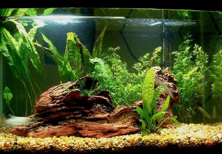 10 gallon plant choices - Aquarium Advice - Aquarium Forum Community