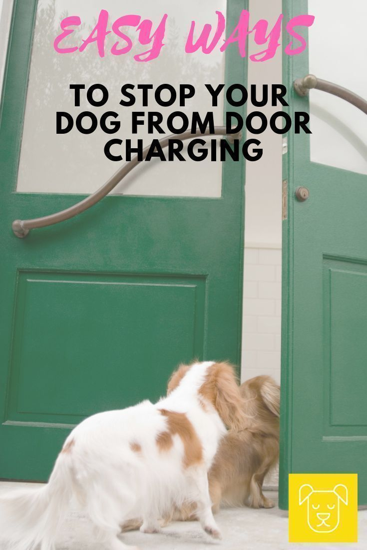 Does Your Dog Try And Charge Out The Front Door As Soon As You