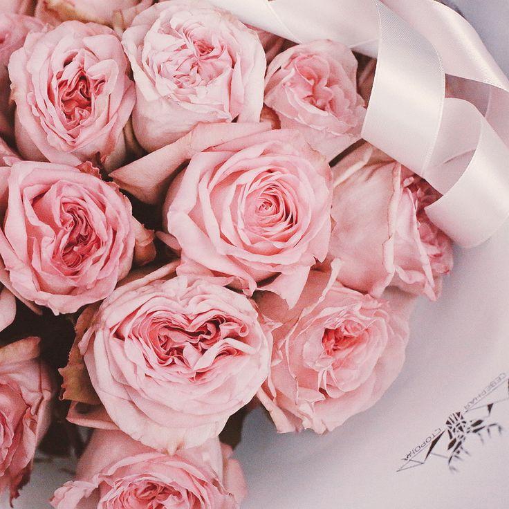 Букет из садовых ароматных роз Pink O` hara😍На первой фото сам букет из свежайших еще не распустившихся роз, а на второй показано раскрытие этого сорта) На наш взгляд это самые ароматные розы, которые можно приобрести!  Цена букета - 4200р. На этот букет принимаем срочные заказы день в день) Заказ лучше оформить по телефону: +7 812 408 46 23 Доставка бесплатная по СПб  #sspinkohara #ssсадовыерозы #ssмонобукет #ssflowers  #севернаясторона #спб2017 #питер2017 #цветыпитер #букетспб…