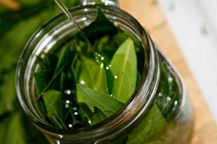 Olio d'oliva e alloro: un calmante naturale
