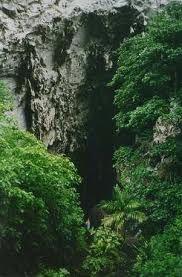 Parque Nacional Natural Cueva de los Guácharos, Colombia - Buscar con Google