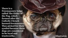 True Facts About Pugs From Mashable - http://weloveourpugs.net/true-facts-pugs-mashable/
