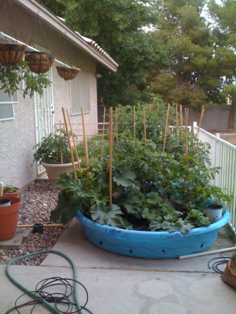 Kiddie Pool Gardening. planning to use ours on the deck away from the 4 legged critters!