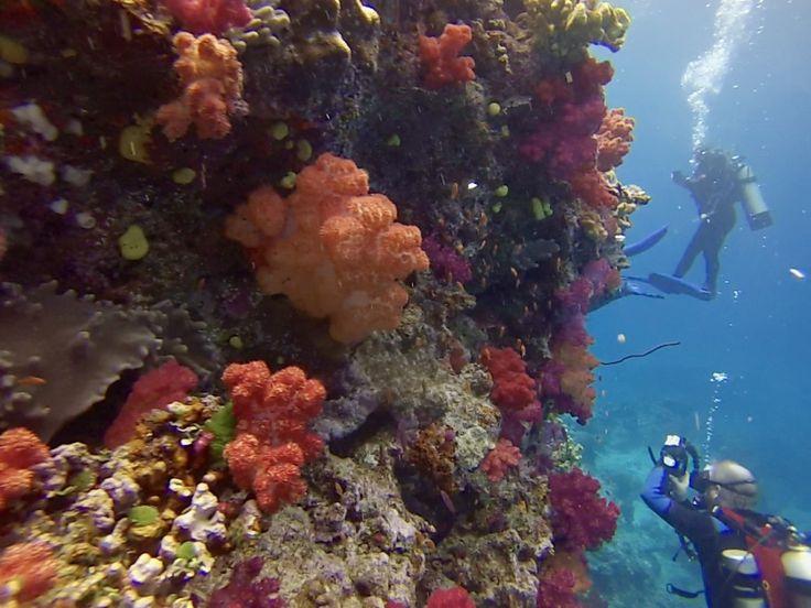 A verified diver review for Fiji Siren scubadive, Viti Levu on ScubaTribe