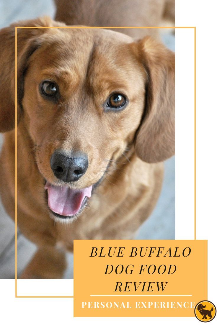 Blue Buffalo Dog Food Review My Personal Experience With Blue