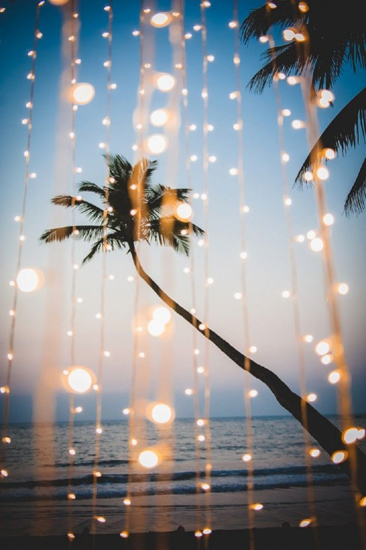 Palm Trees + Twinkle Lights