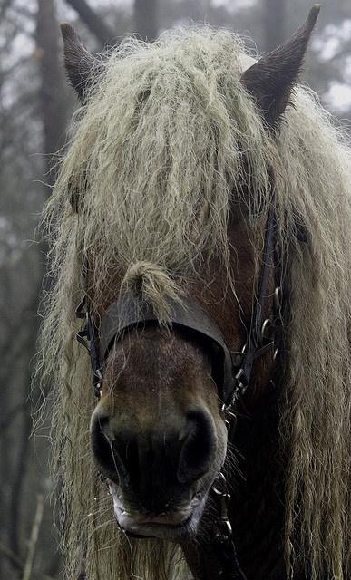 Dieren, trekpaard, Lex? by Ben ter Mull, via Flickr