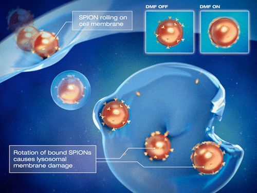 Magnetically controlled nanoparticles cause cancer cells to self-destruct