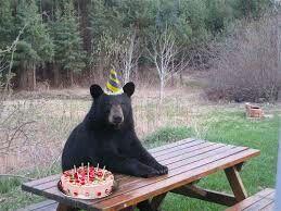 Birthday Bear!