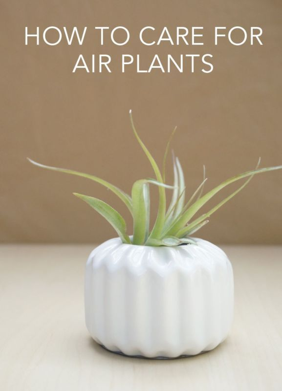 17 best images about projects to grow our micro urban farm on pinterest gardens survival and - Easy to take care of indoor plants ...