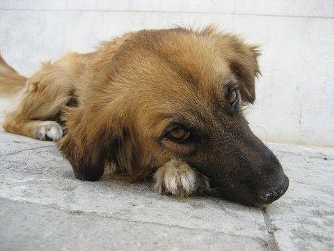 Armer Hund lebt in Pappkarton und wir gerettet
