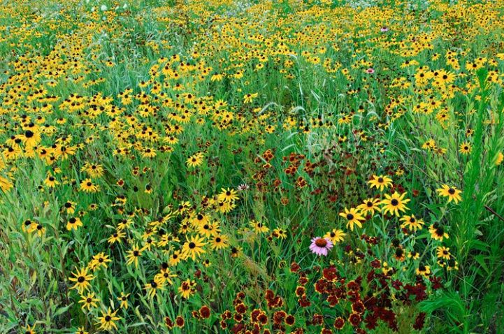 Summer wildflower meadow (1) From: Sunny Delights Randomness, please visit