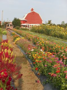 Fall Fun: Guide to Pumpkin Patches, Festivals and Corn Mazes in Denver Area