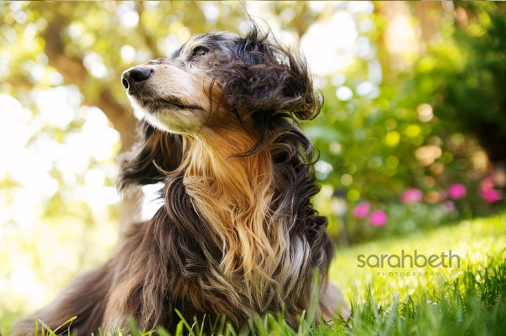Sarah Beth Photography    love the colors and love the dog!Pets Portraits, Pet Photography, Dogs Photography, Inspiration Photos, Dogs Lose, Beth Photography, Lose Interesting, Lucilla Vacondio, Bokeh Lights