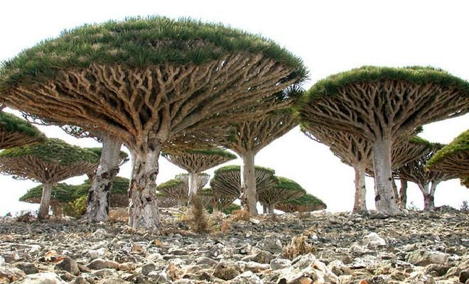 Socotra: Yemen's Legendary Island