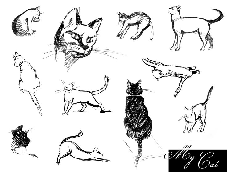 Картинки кошка в движении