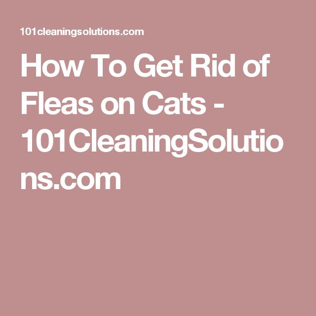 how to get rid of fleas on your cat