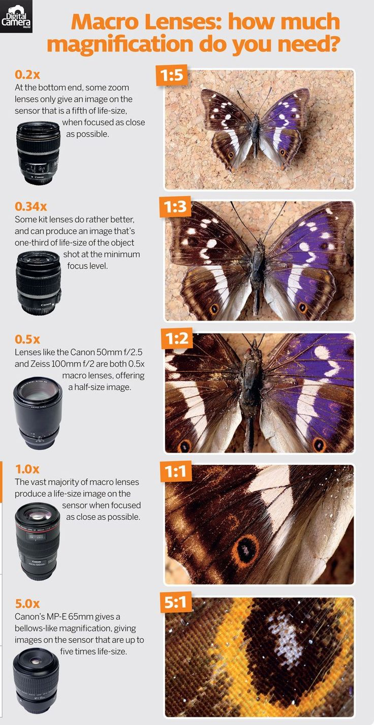 What is a macro lens? Magnification and minimum focus distance explained (free photography cheat sheet)