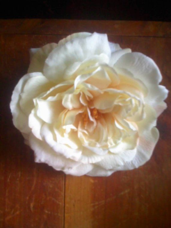 white or ivory english rose hair clip wedding by bettysstems
