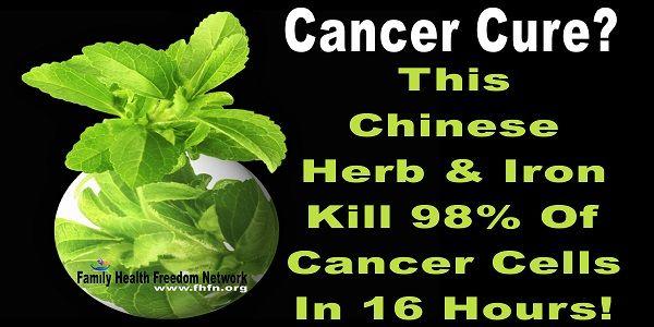 Cancer Cure? Tento čínsky Herb a Iron zabiť 98% nádorových buniek v 16 hodín!   Family Health Freedom Network