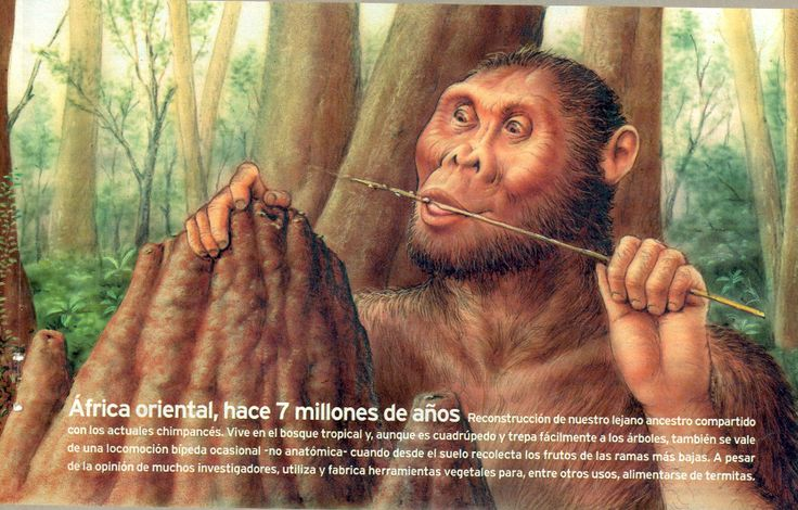 7 millones años