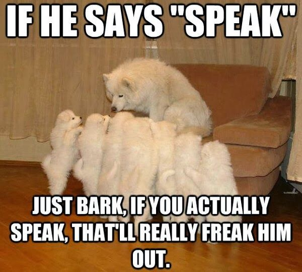 Follow Gwyl Io For More Diy Kids Pets Videos Funny Dog Captions Animal Captions Funny Dog Pictures