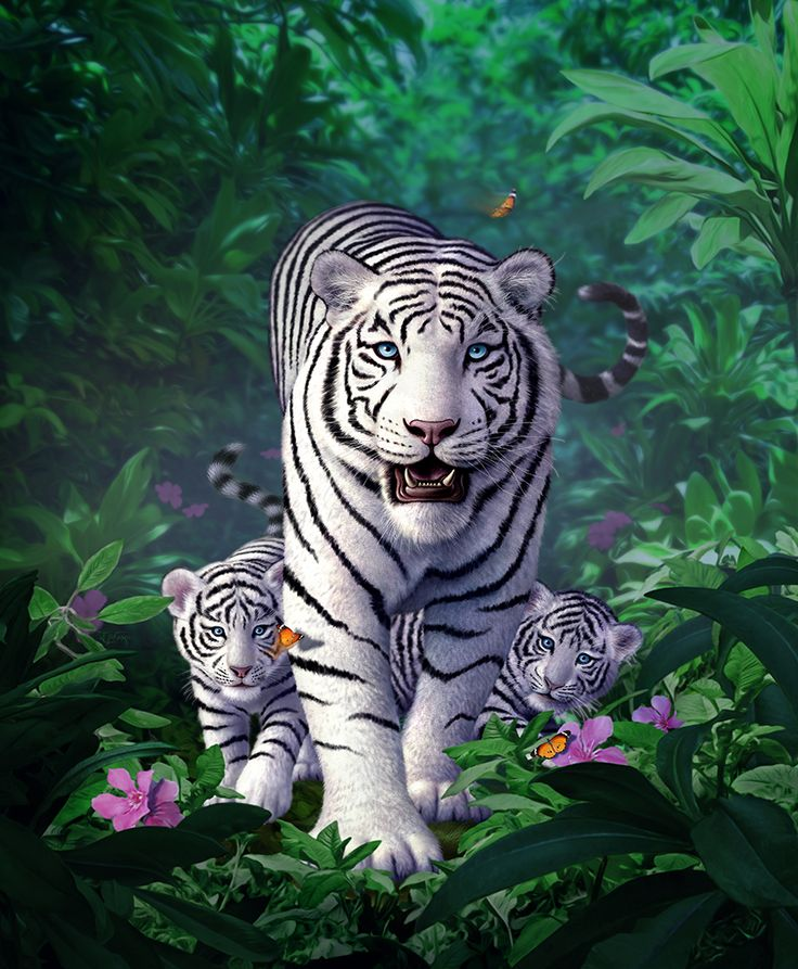 White Tigers by Jerry LoFaro   Creatures   2D   CGSociety