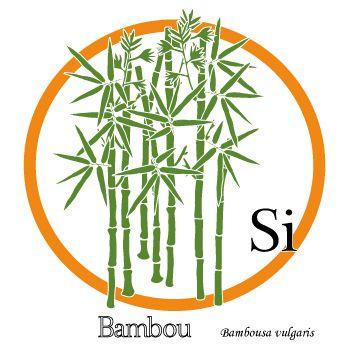 Dessin de plante. Le bambou - concentré de silice organique.