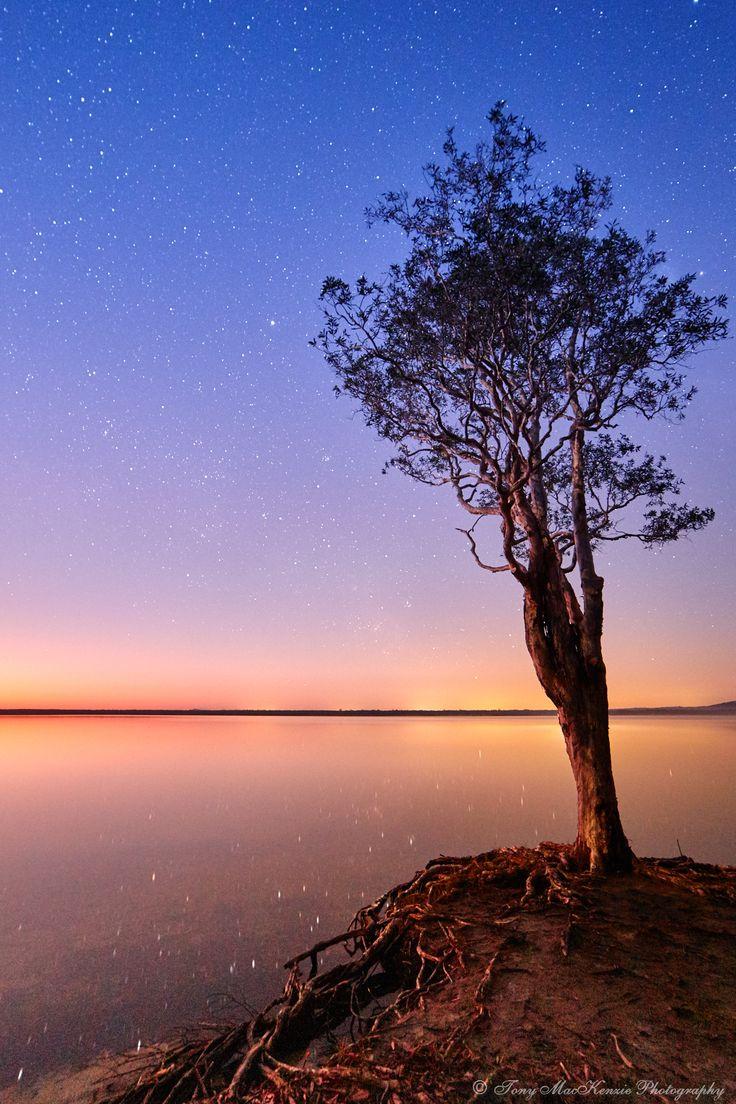 Sun rising Lake Cootharaba, Boreen Point.