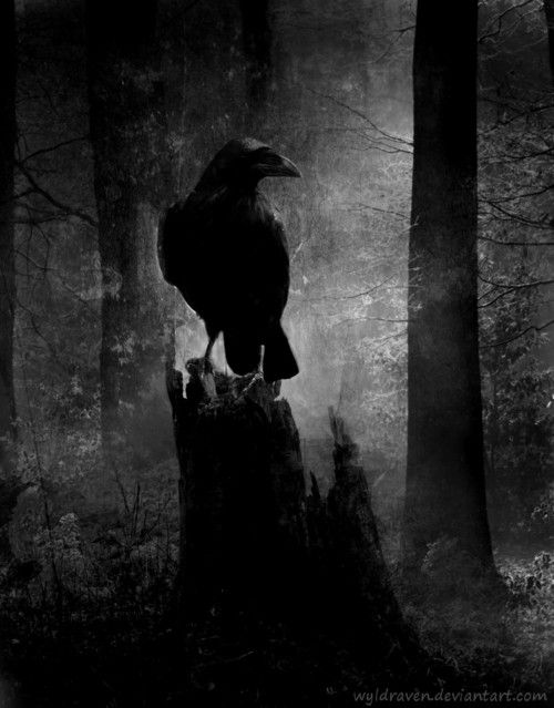 standing still, raven in the woods
