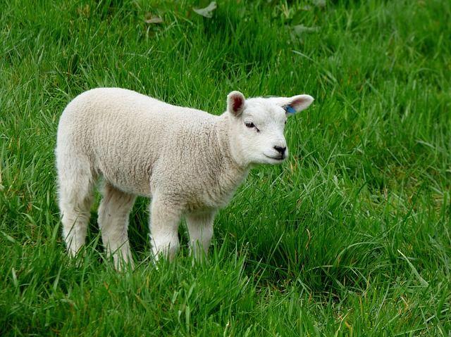 Najlepszy wypas! http://puszystaowca.pl/wypas-owiec/