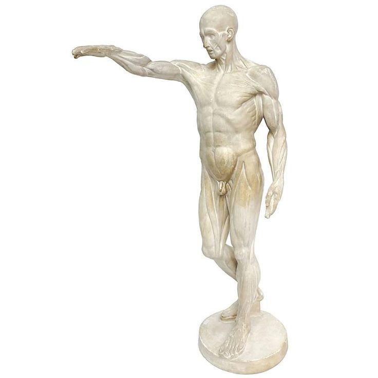 Anatomical Flayed Cast of Plaster Depicting a Standing Man with Lifted Arm   From a unique collection of antique and modern sculptures at https://www.1stdibs.com/furniture/decorative-objects/sculptures/