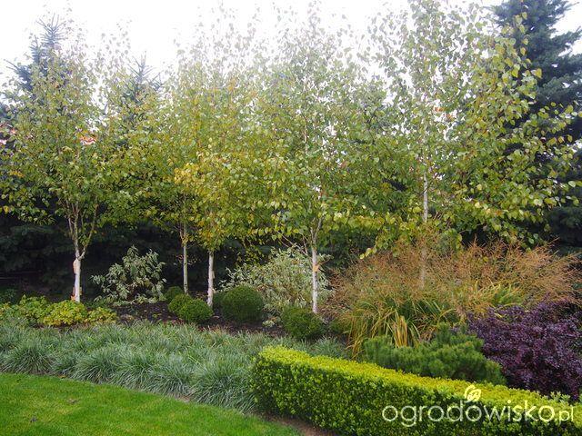 Marzenia i plany vs. rzeczywistość - strona 428 - Forum ogrodnicze - Ogrodowisko