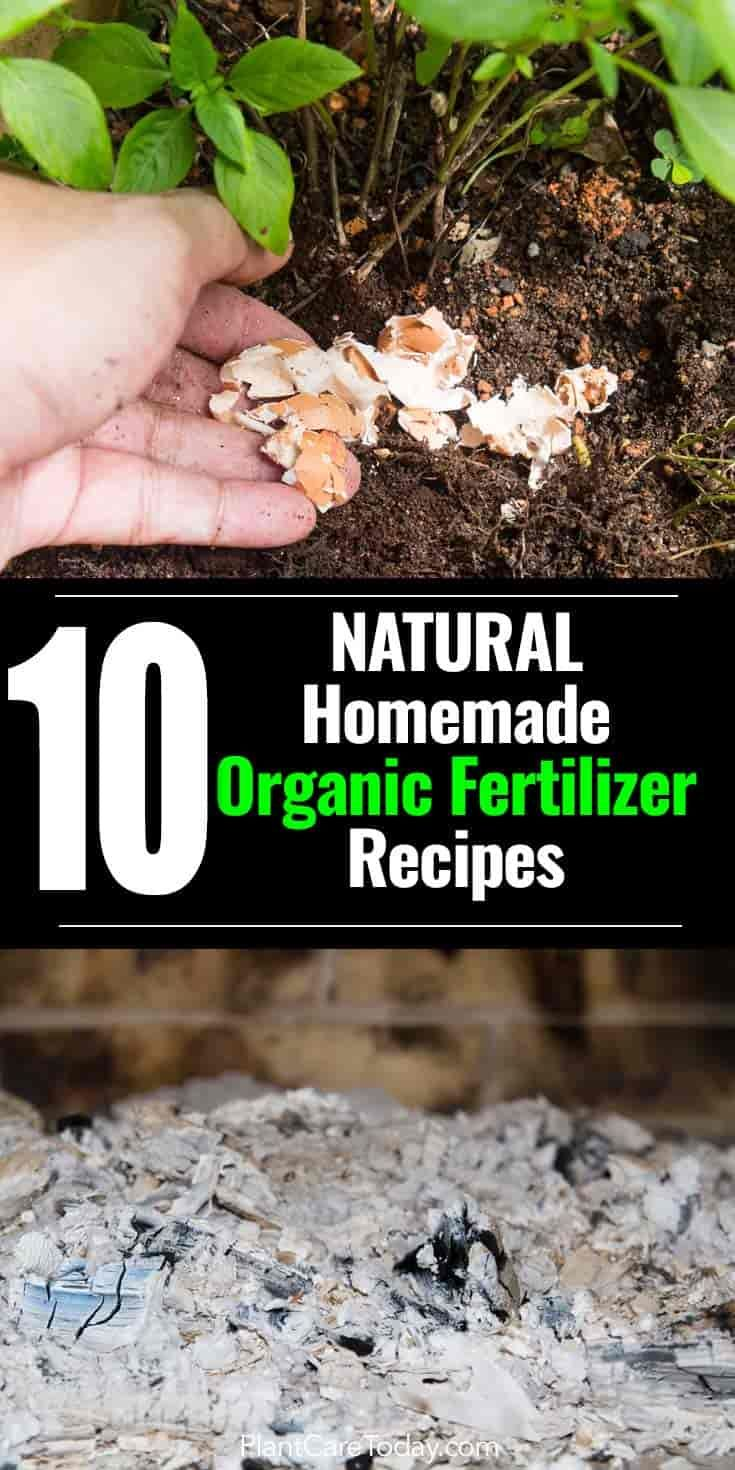 10 Natural Homemade Organic Fertilizer Recipes Best Of 640 x 480