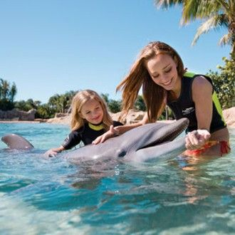 Swim with the Dolphins and Snorkel the Grand Reef Family Adventure with a 3 Night One Room Hotel Stay and Airfare for (4)