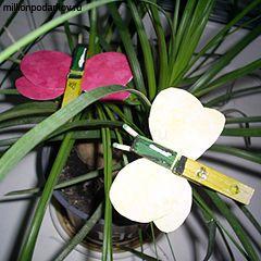 Поделки из бельевых прищепок «Бабочки» с фото инструкцией