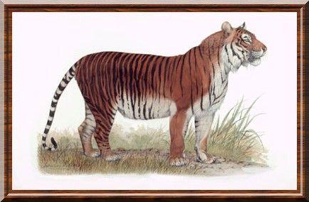 Tigre des îles de la Sonde