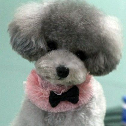 Sweet Cute Fashion for Dog Jewelry Lace Collar Neck Band for Pet Style Clothing
