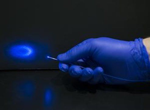 Light -- not pain-killing drugs -- used to activate brain's opioid receptors -- ScienceDaily