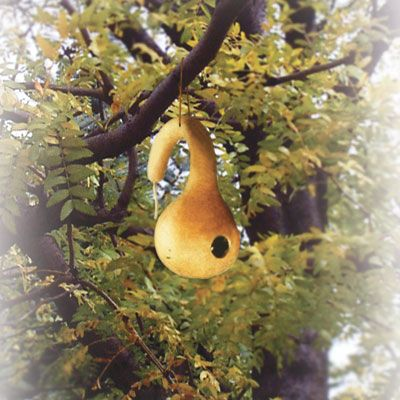 "bird house gourd 1 3/8"" hole for wrens, nuthatches, 1 5/8 hole bluebirds, swallows some woodpeckers, 2"" martins, woodpeckers."