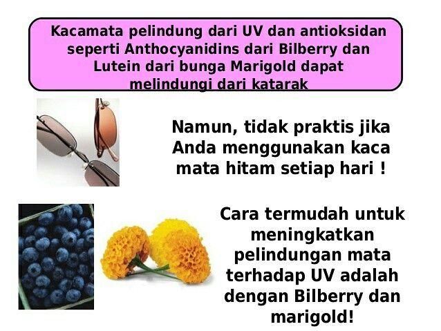 jaga mata dengan bilberri  #matalansia #mataterang #mata #mataminus #matarabun #katarak #bilberry #bilberri #bilberi #sakitmata #mataberair #radhiani