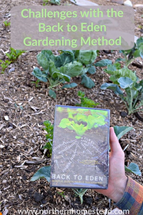 3 main Challenges with the Back to Eden Gardening Method. Despite the challenges though, we would always do it again. This will help you to a good start.