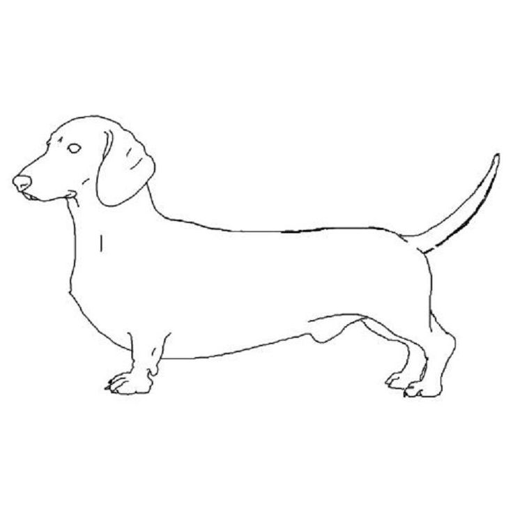 Weenie Dog Coloring Pages   Dachshund drawing, Dog stencil