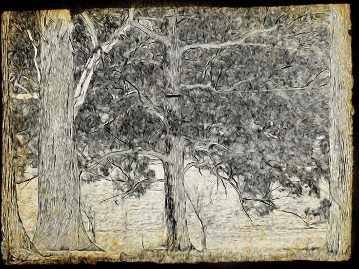 Dobell trees