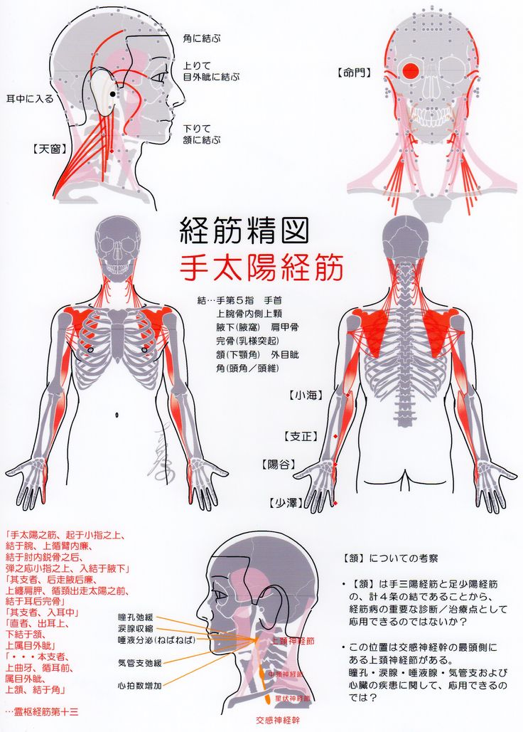 14 best 經絡 images on Pinterest | Acupuncture, Traditional chinese ...