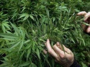 Il NY Times spinge per legalizzazione marijuana: