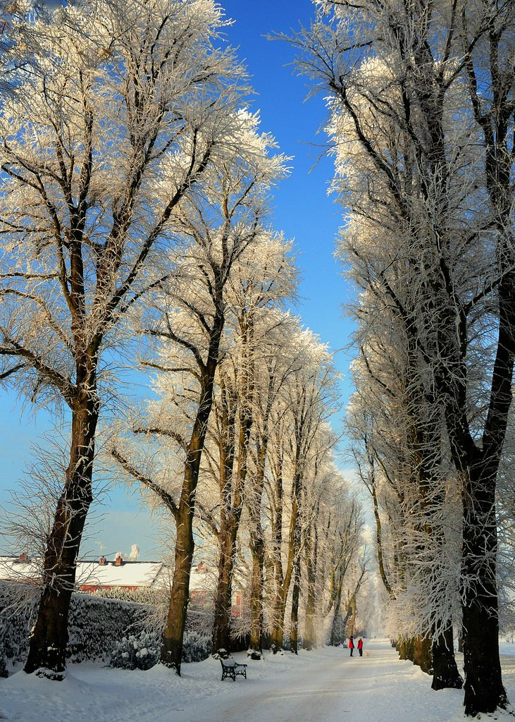 Winter walk (Craigavon, Northern Ireland, UK) by Robert Louden❄️