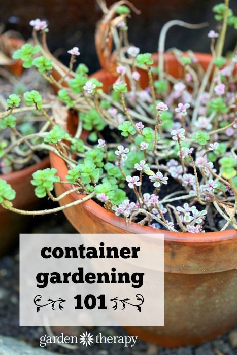 The Secrets to Successful Apartment Gardening | #Horticool #ApartmentGardening #Gardening