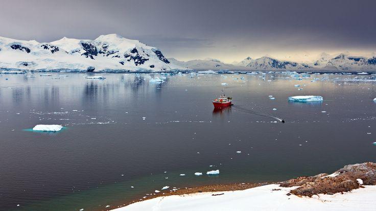 В гости к пингвинам. Антарктика. M/S Antarctic Dream. Маленькие точки на берегу и есть хозяева - пингвины. Автор: Александр Перов