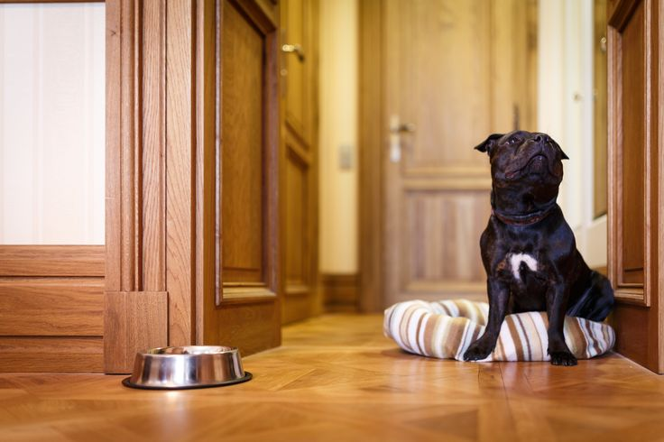 Dogs welcome in Quisisana Palace Karlovy Vary